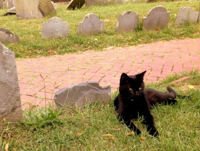 Black Cat at Copps Hill
