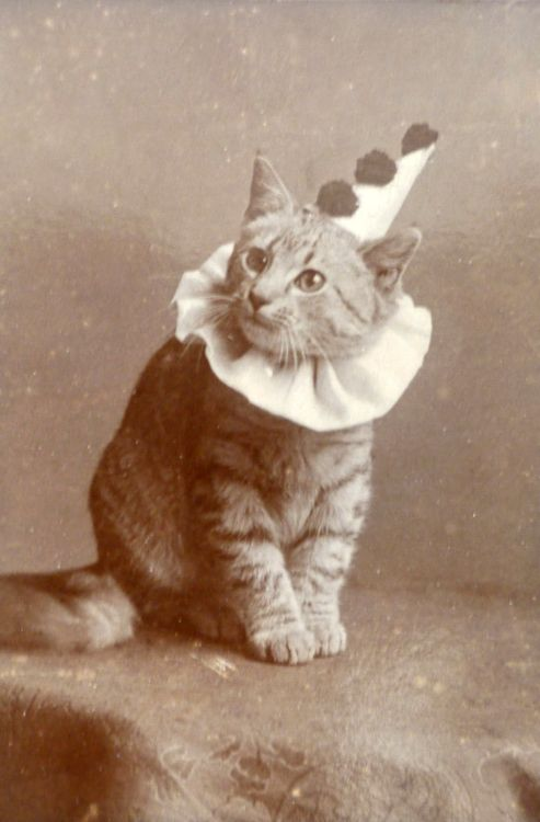Cat dressed as clown