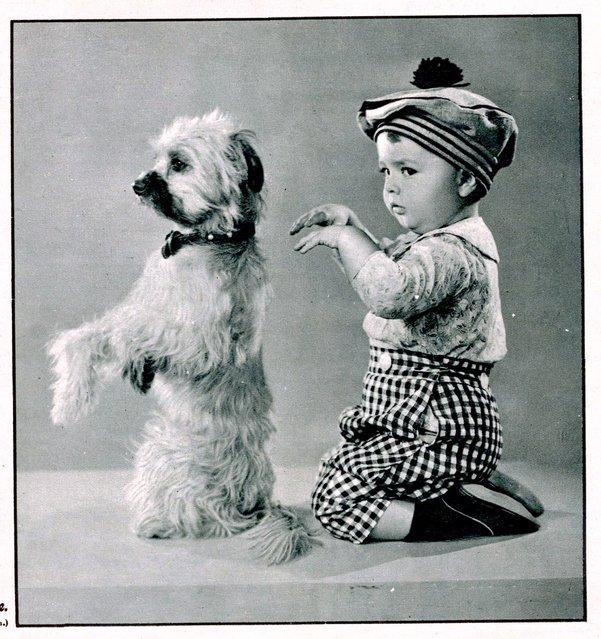 Dog and boy begging