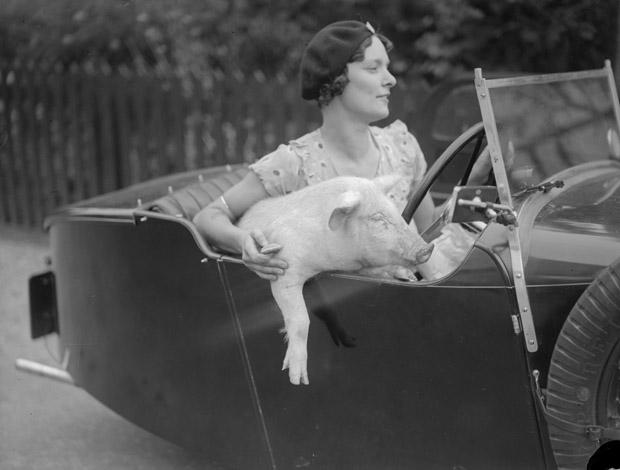 Woman with pig in car