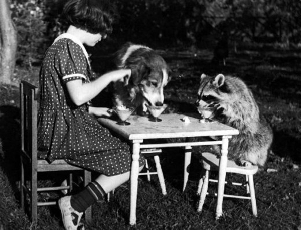 Girl having tea with dog, racoon