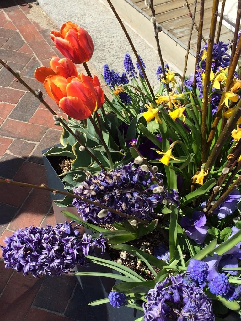 flowers, Newburyport MA
