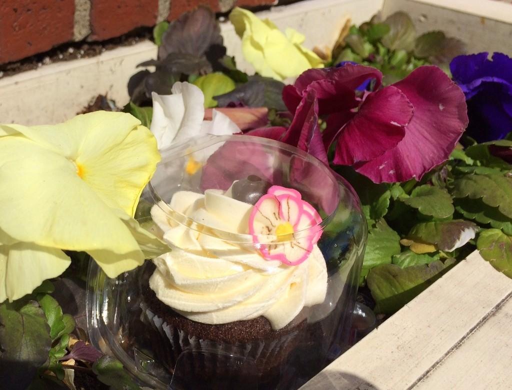 pansy cupcake, Newburyport MA