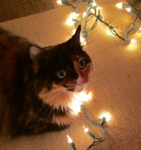 clooney-with-lights